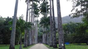 Palmenallee Botanischer Garten in Rio