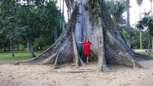 gigantic roots - botanical garden of Rio