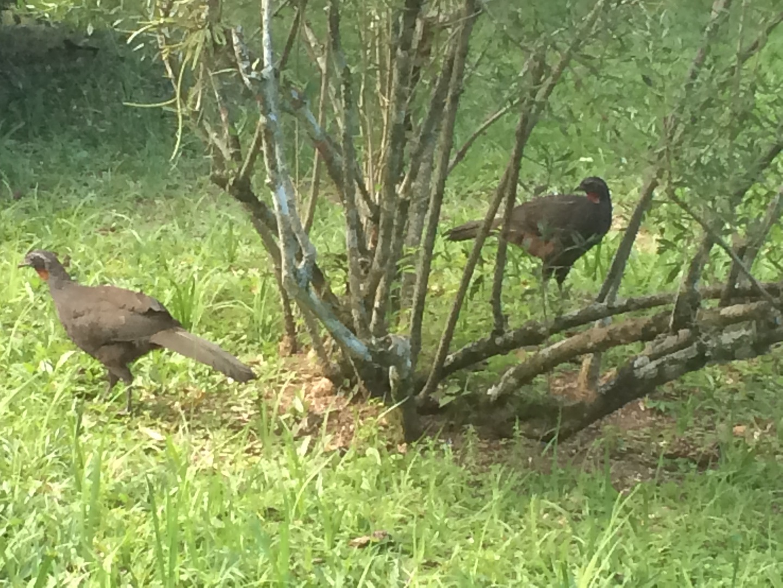 Vögel im Botanischen Garten