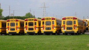 jede Menge Schulbusse