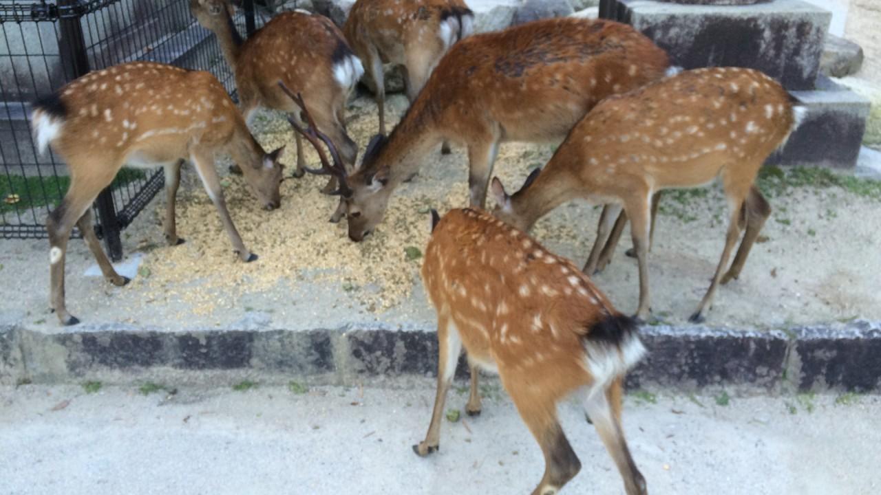 street deers get food