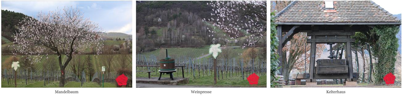 Impressionen Weinlehrpfad